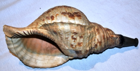 Antique_Japanese_horagi_(conch_shell_trumpet)